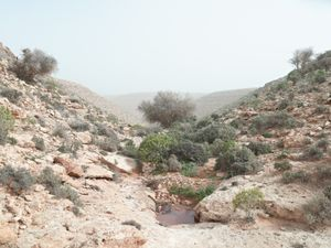 """Watering hole, Wadi Zitoune Battlefield, Libya 