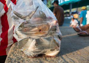 Aurelio's bag of fish. Zihuatanejo.