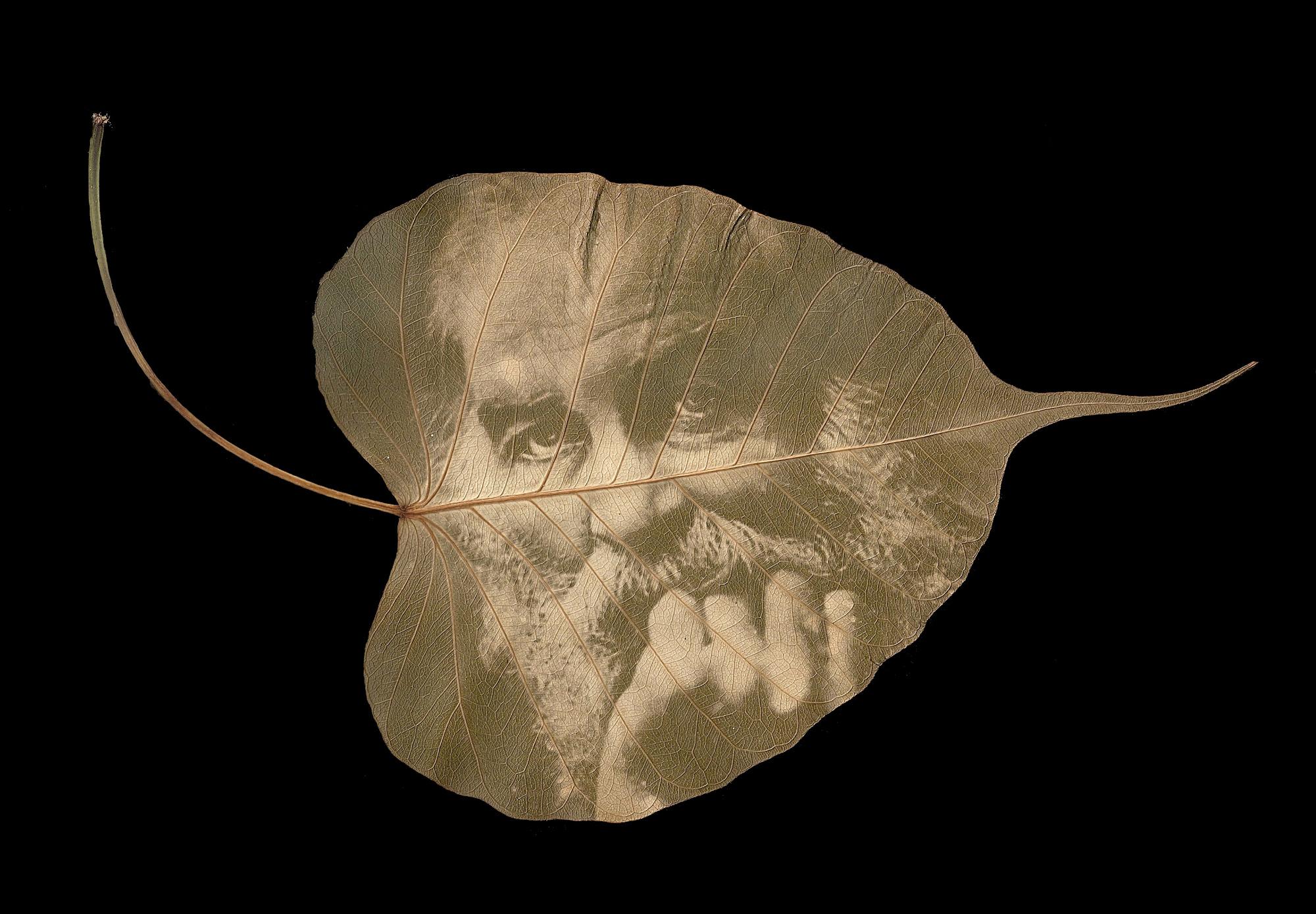 War Memoranda: Chlorophyll Leaf Prints