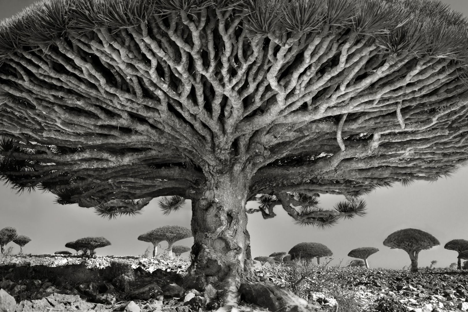 Portraits of Time: Ancient Trees
