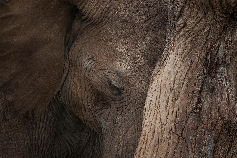 Stop Ivory