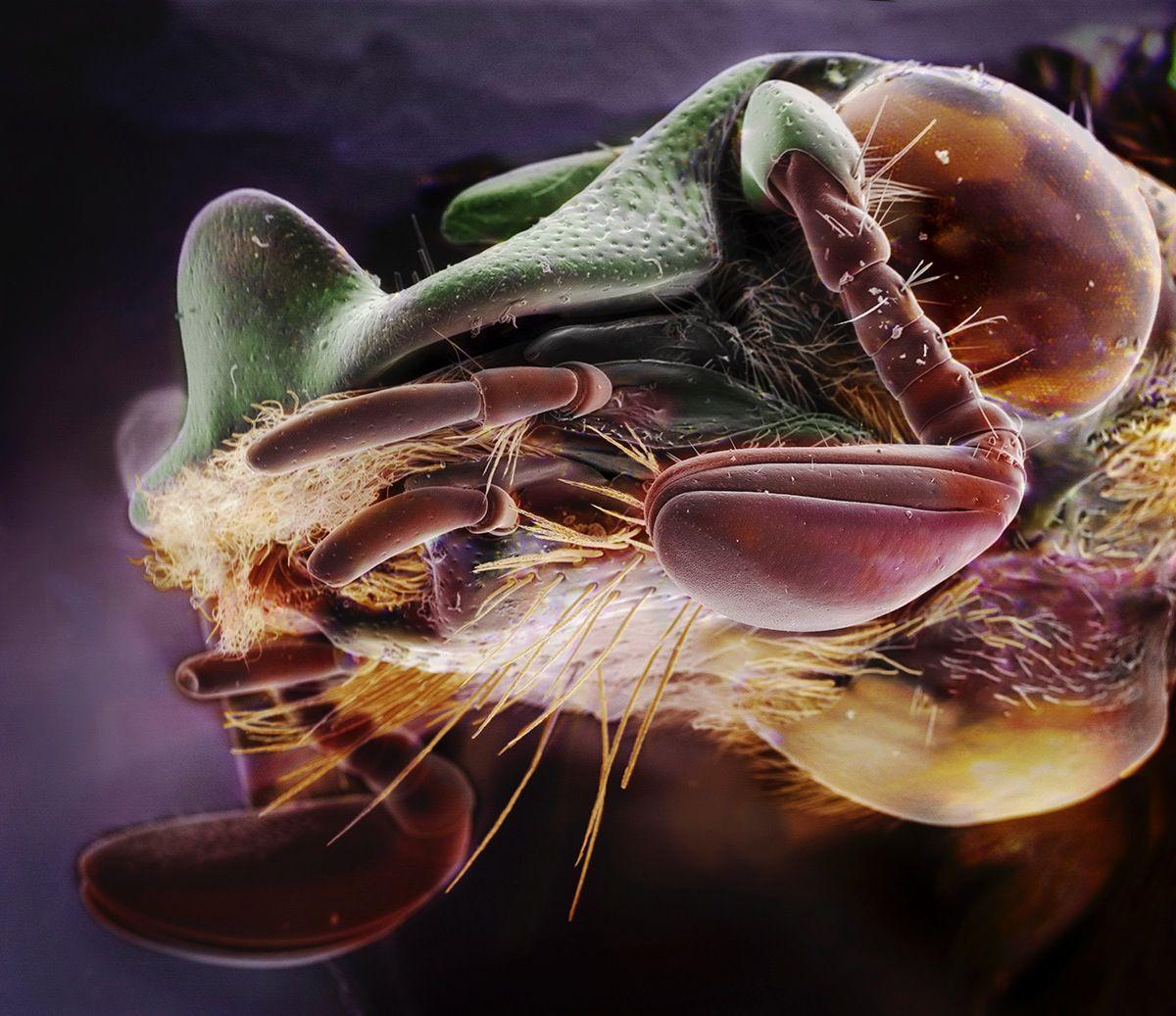 Suburban Symbiosis: Insectum Domesticus