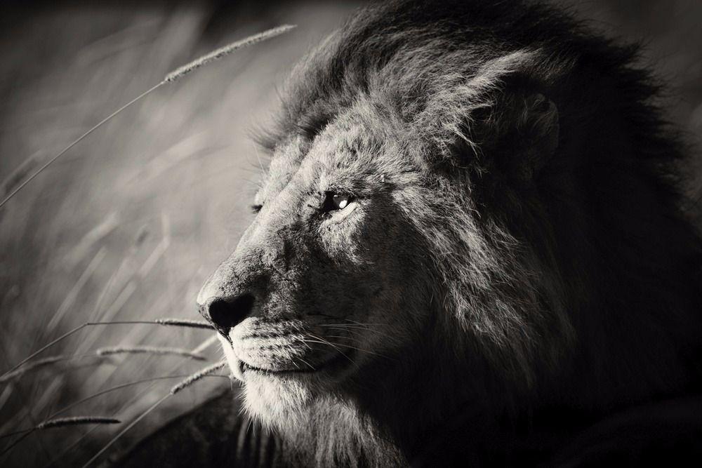 Africa Noire: Kings of the Savannah