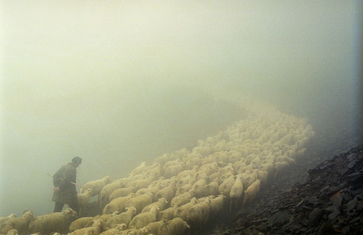 Akrak Vazha (The Shepherd's Way)